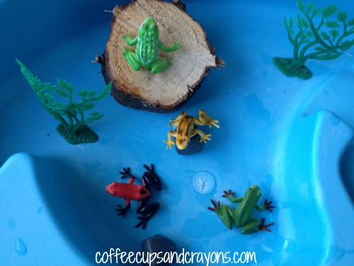 Life Cycle for a Frog Kids Activity