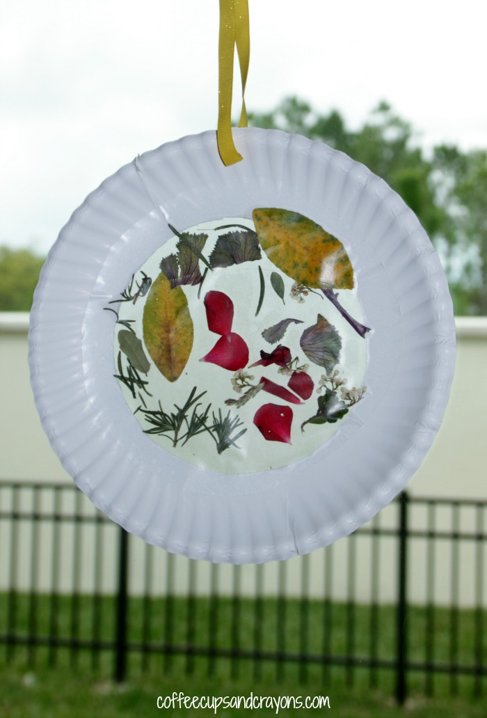 Nature suncatcher craft for kids coffee cups and crayons for Suncatcher craft for kids
