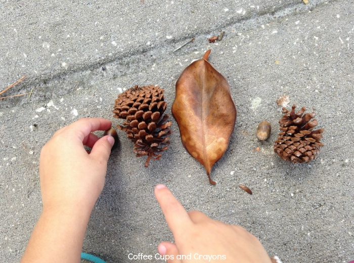 Work on math patterns in nature!