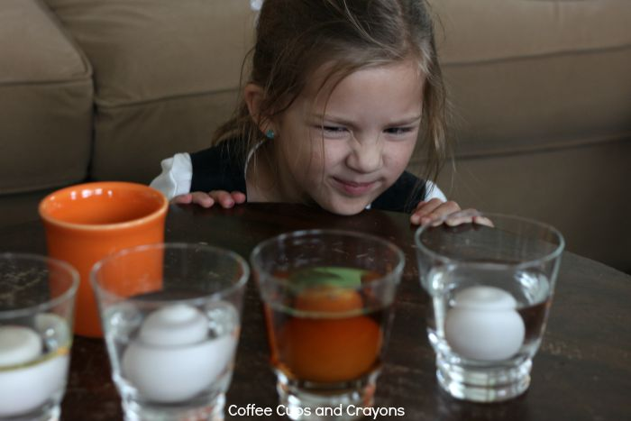 Make an Egg Float Science Experiment